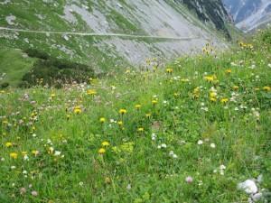 romantische Bergwiesen