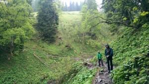 So grün der Wald...